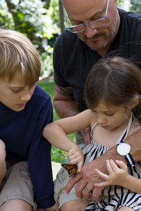 Father with son and daughter looking at monarch butterflyの写真素材 [FYI03563188]