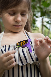 Girl holding monarch butterfly on flowerの写真素材 [FYI03563195]