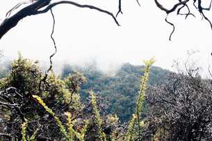 Landscape with tree branch and misty forest, Big Sur, California, USAの写真素材 [FYI03563365]