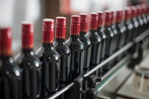 Row of red wine bottles on production line of wine bottling plantの写真素材 [FYI03564410]