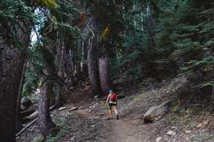 Woman hiking through forest, rear view, Mineral King, Sequoia National Park, California, USAの写真素材 [FYI03564464]
