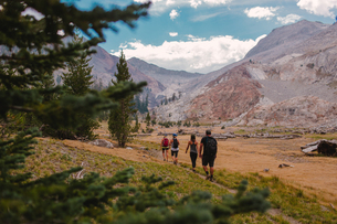 Group of friends hiking along pathway, rear view, Mineral King, Sequoia National Park, California, Uの写真素材 [FYI03564470]