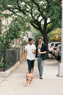 Young male couple eating ice cream cones whilst walking dog on suburban sidewalkの写真素材 [FYI03565078]