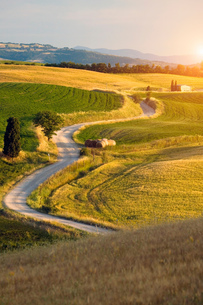 Agricultural landscape, Val d'Orcia, Siena, Tuscany, Italyの写真素材 [FYI03565532]