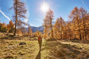 Woman hiking, rear view, Schnalstal, South Tyrol, Italyの写真素材 [FYI03566023]