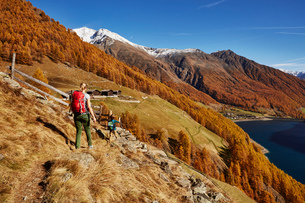 Family hiking, rear view, Schnalstal, South Tyrol, Italyの写真素材 [FYI03566045]