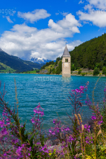 Submerged Curon church bell tower in lake, Vinschgau Valley, South Tyrol, Italyの写真素材 [FYI03566369]