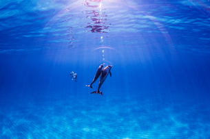 Atlantic Spotted dolphins, underwater viewの写真素材 [FYI03567301]