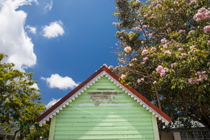 Low angle view of green hut and blossoming tree, Reunion Islandの写真素材 [FYI03568545]