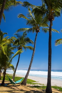 Male tourist reclining on beach hammock by Indian Ocean, Reunion Islandの写真素材 [FYI03568549]