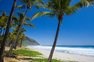 Beach landscape with palm trees and Indian Ocean, Reunion Islandの写真素材 [FYI03568550]