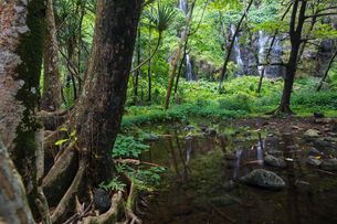 Rainforest landscape and waterfall, Reunion Islandの写真素材 [FYI03568555]