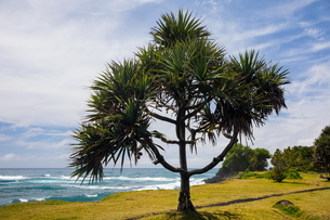 Coastal landscape and Indian Ocean, Reunion Islandの写真素材 [FYI03568556]