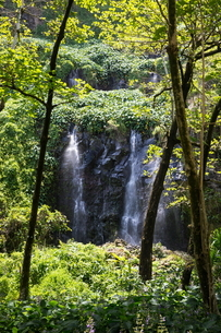 Rainforest waterfall flowing over rock face, Reunion Islandの写真素材 [FYI03568560]