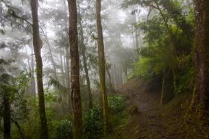 Path through misty tropical rainforest, Reunion Islandの写真素材 [FYI03568578]