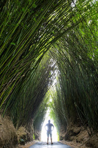 Man standing on road between arch of tall bamboo plants, Reunion Islandの写真素材 [FYI03568581]