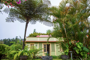 Traditional green wooden house and palm trees, Reunion Islandの写真素材 [FYI03568582]