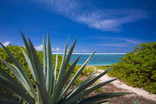 View of Indian Ocean and tropical plants, Reunion Islandの写真素材 [FYI03568588]