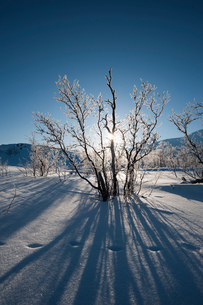 A frozen landscape near Kiruna, Swedenの写真素材 [FYI03568633]