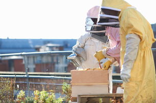 Male and female beekeepers tending trays on city rooftopの写真素材 [FYI03568647]