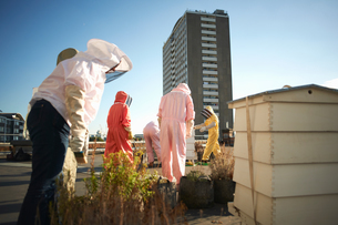 Beekeepers tending aviary on city rooftopの写真素材 [FYI03568651]