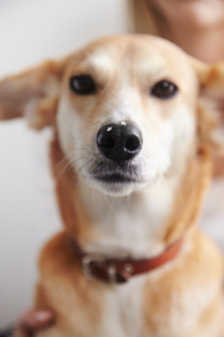 Portrait of dog with glittery stars on noseの写真素材 [FYI03568920]