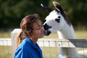 Farm worker being kissed by llamaの写真素材 [FYI03569814]
