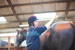 Young woman brushing horse with horse brushの写真素材 [FYI03569837]