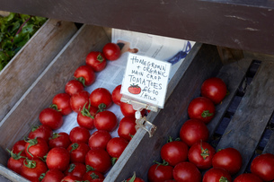 Homegrown tomatoes for sale, close-up, Cork, Irelandの写真素材 [FYI03571198]