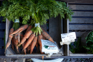 Homegrown carrots for sale, close-up, Cork, Irelandの写真素材 [FYI03571199]