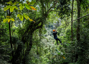 Woman on zip wire in forest, Ban Nongluang, Champassak province, Paksong, Laosの写真素材 [FYI03571795]