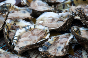 Full frame image of fresh oystersの写真素材 [FYI03572059]