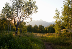 Summit trail in the Uinta National Forest, Aspen Grove, Utah, USAの写真素材 [FYI03572185]