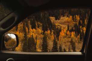 View of autumn forest from car window, Mineral King, Sequoia National Park, California, USAの写真素材 [FYI03572780]