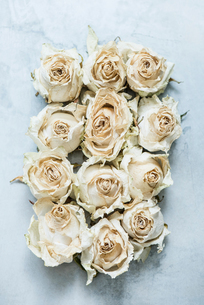 Dried rose heads, close-up, overhead viewの写真素材 [FYI03575516]