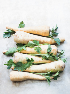 Parsnips and parsleyの写真素材 [FYI03577473]