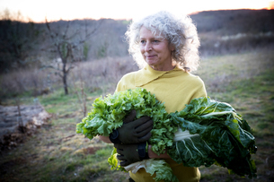 Mature woman carrying armful of cabbage and salad leaves in fieldの写真素材 [FYI03577889]