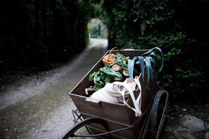 Handcart of freshly picked spring greens and squash vegetable  in gardenの写真素材 [FYI03577901]