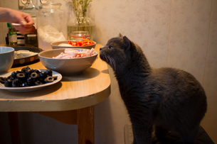 Young woman at home, making home-made pizza, pet cat sniffing ingredients, mid sectionの写真素材 [FYI03578854]