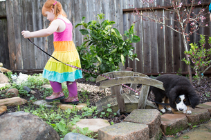 Young girl trying to walk pet dog in gardenの写真素材 [FYI03578959]