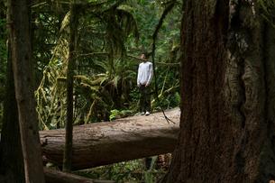 Teenage boy standing on fallen tree trunk looking away, Pacific Rim National Park, Vancouver Island,の写真素材 [FYI03579510]