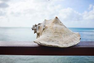 Conch shell, Saint Lucia, Caribbeanの写真素材 [FYI03579906]