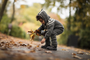 Young girl  outdoors, wearing knitted suit, collecting autumn leavesの写真素材 [FYI03580792]