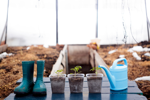 Seedling with wellington boots and watering canの写真素材 [FYI03581040]
