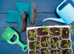 Seedling with wellington boots and watering canの写真素材 [FYI03581042]
