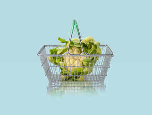 Cauliflower in miniature shopping basket on blue backgroundの写真素材 [FYI03581691]