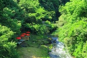 新緑の鶴仙渓の写真素材 [FYI03582119]