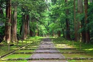 新緑の平泉寺白山神社の写真素材 [FYI03582404]