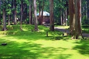 新緑の平泉寺白山神社の写真素材 [FYI03582467]