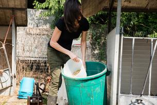 Female organic farmer getting bucket of feed at dairy farmの写真素材 [FYI03582762]